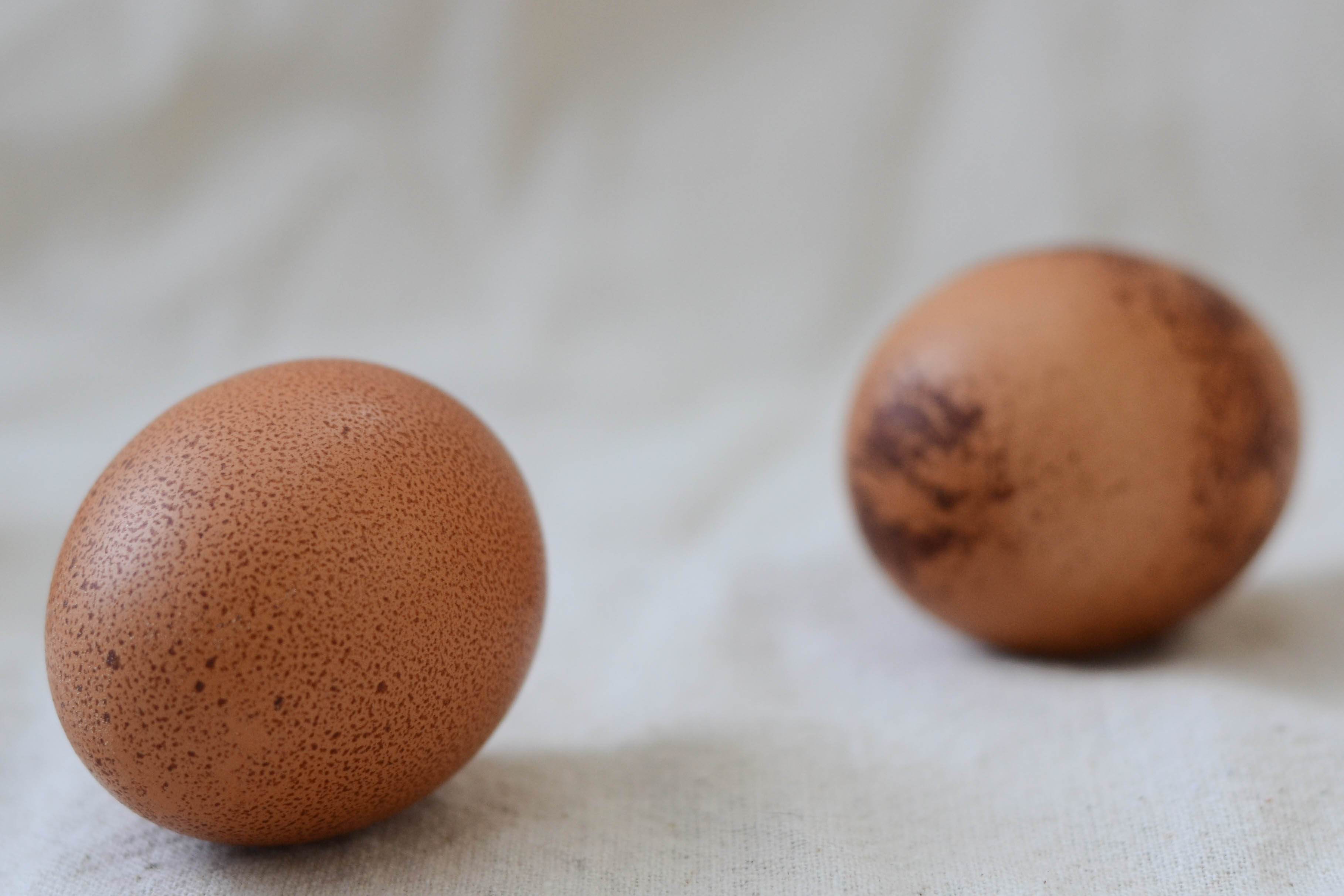 Black and red sex link eggs