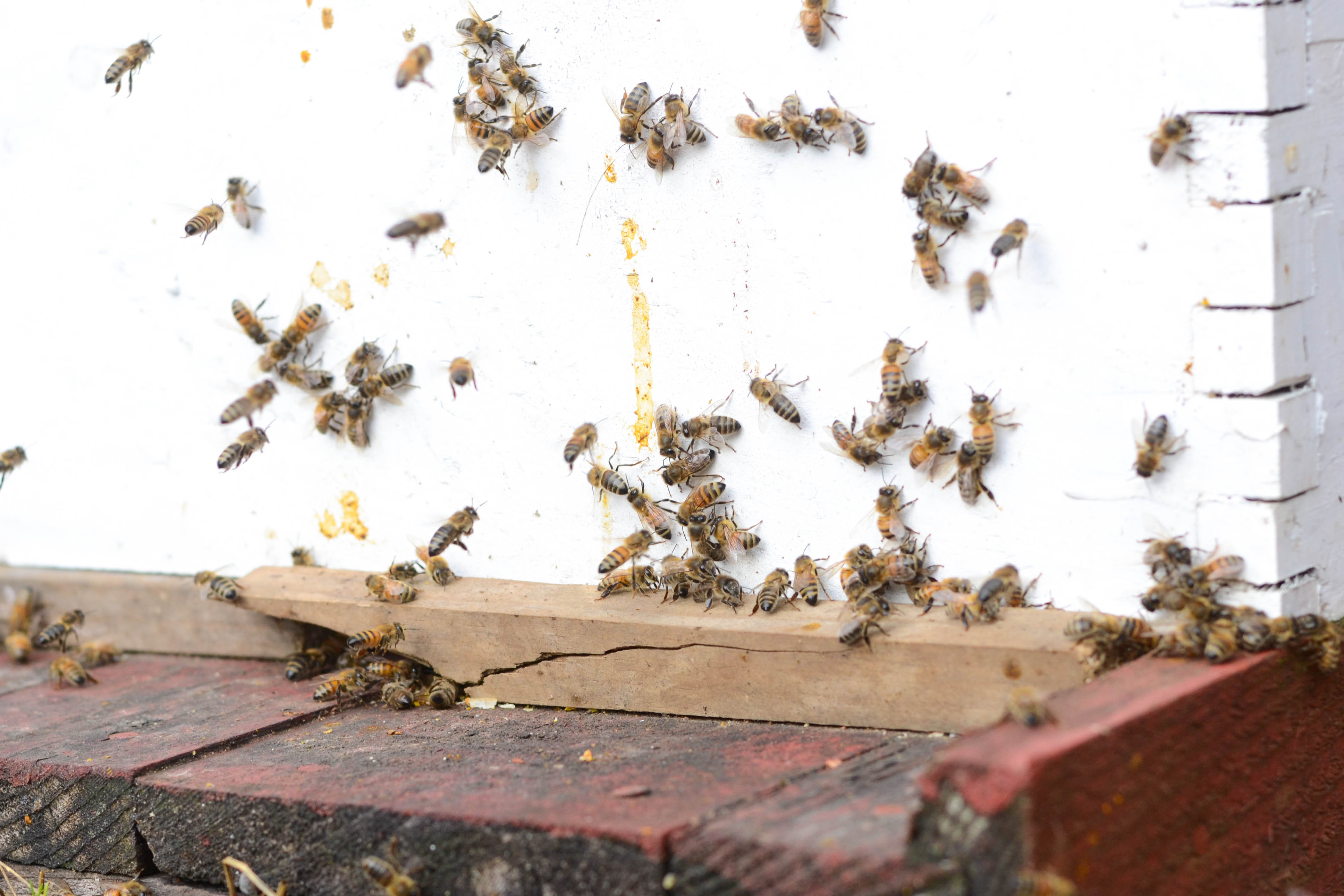 Bees Flying in Winter