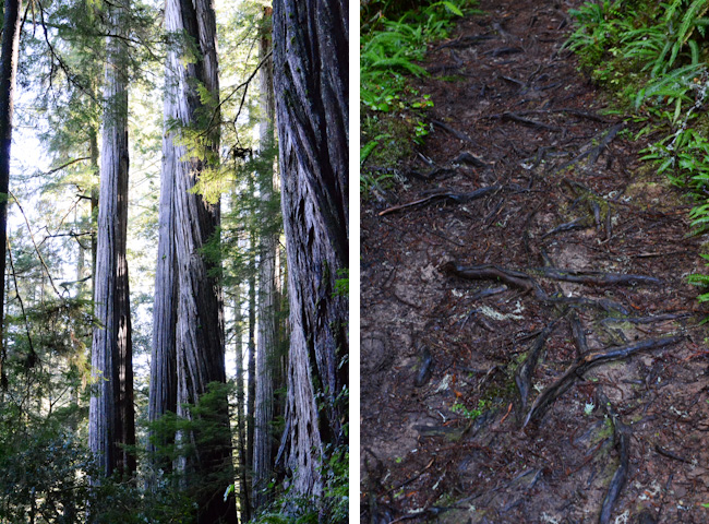 roots-in-path