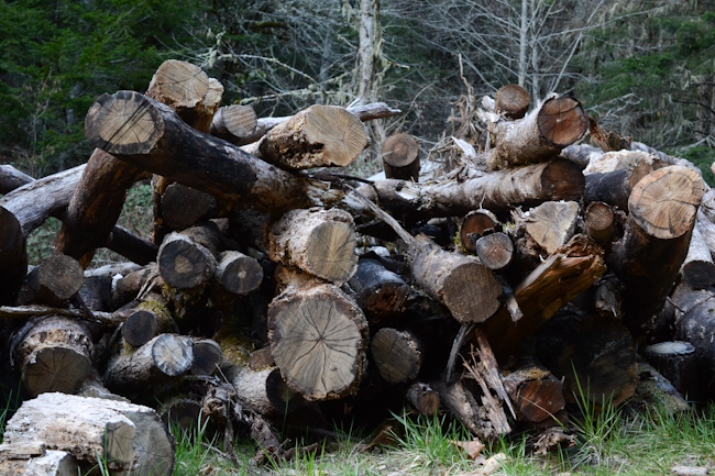 firewood logs // Wayward Spark