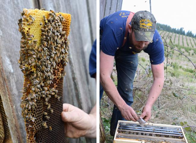barn-bees-buzzing-henry