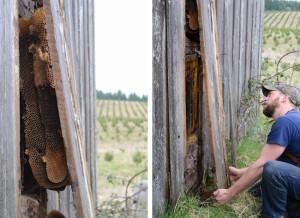 barn-comb-henry