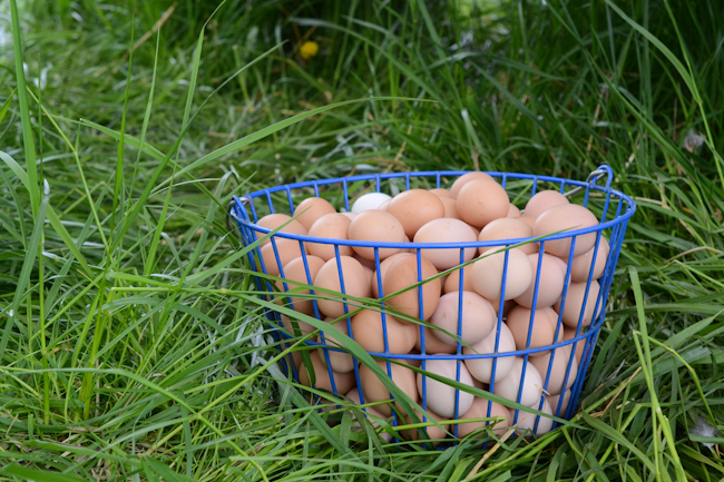 egg basket at Provenance Farm // Wayward Spark