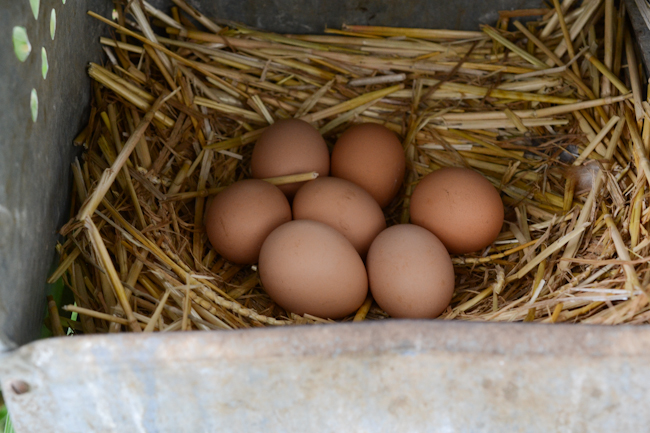 eggs in a nesting box at Provenance Farm // Wayward Spark