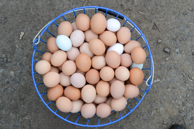 one day's eggs at Provenance Farm // Wayward Spark