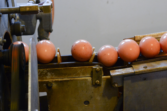 egg washer at Provenance Farm // Wayward Spark