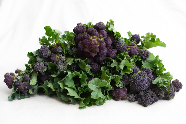 purple sprouting broccoli // Wayward Spark