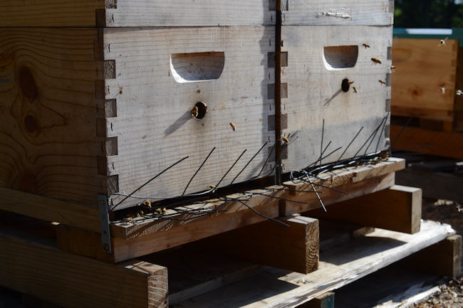bee hives with homemade skunk guards // Wayward Spark