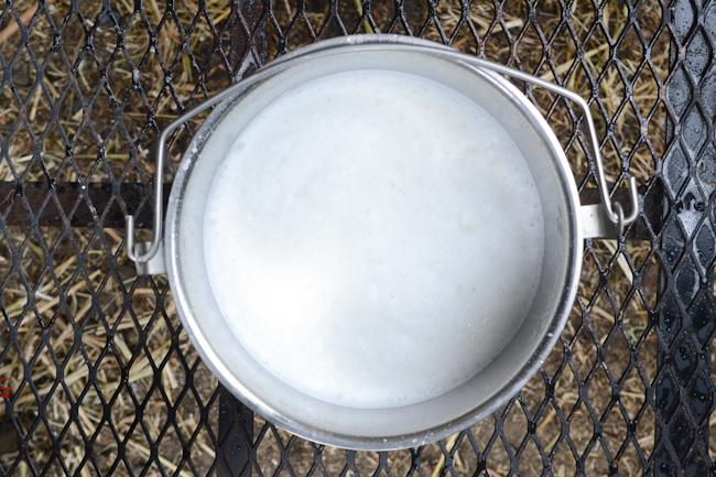 fresh milk in a pail // Wayward Spark