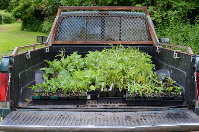 truck full of plant starts // Wayward Spark