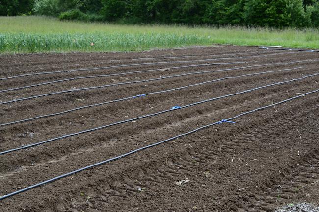 drip irrigation // Wayward Spark