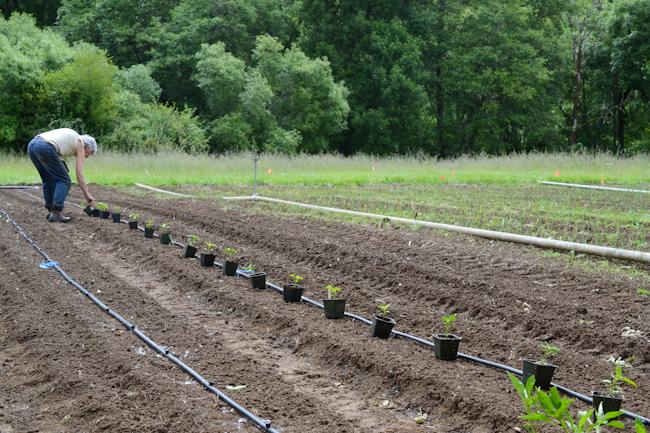 planting starts // Wayward Spark