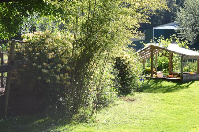honeysuckle in the garden // Wayward Spark