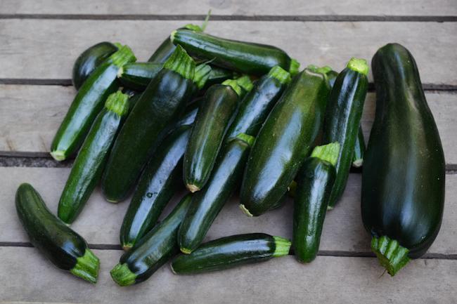 first zucchinis // Wayward Spark