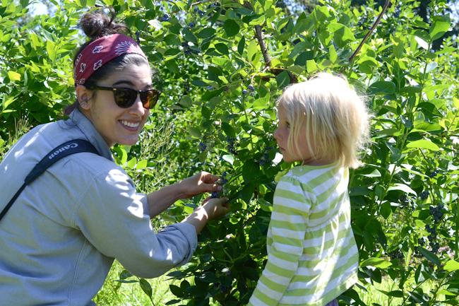 Yossy Arefi picking blueberries // Wayward Spark