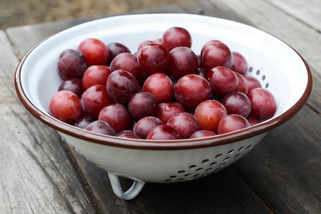 cherry plums // Wayward Spark