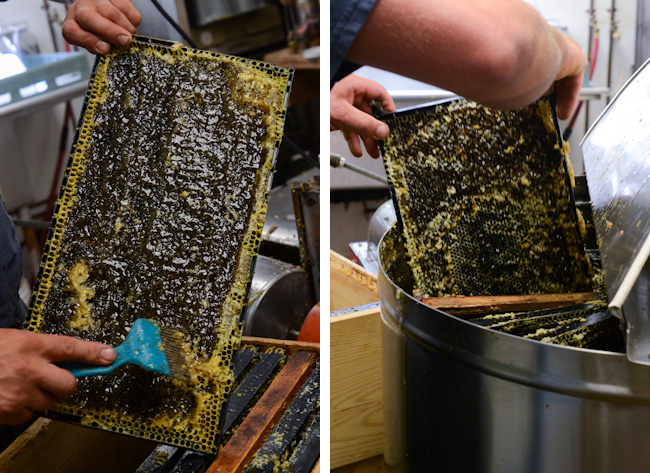 extracting honey // Wayward Spark