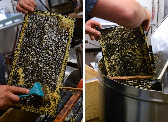 extracting honey // Wayward Spark