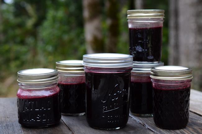 elderberry syrup // Wayward Spark