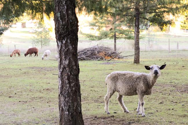 Blakesley Creek Farm // Wayward Spark