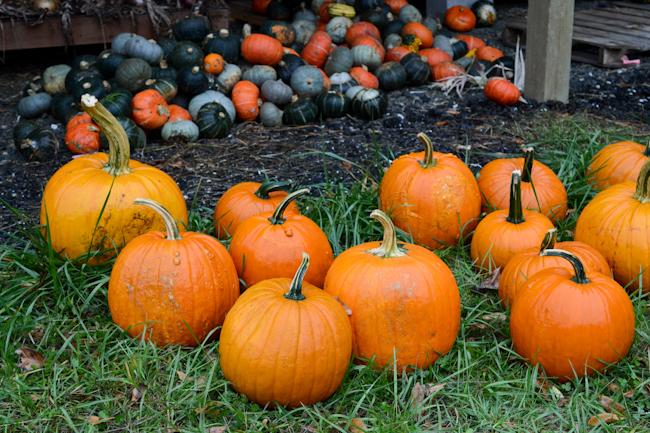 pumpkins // Wayward Spark