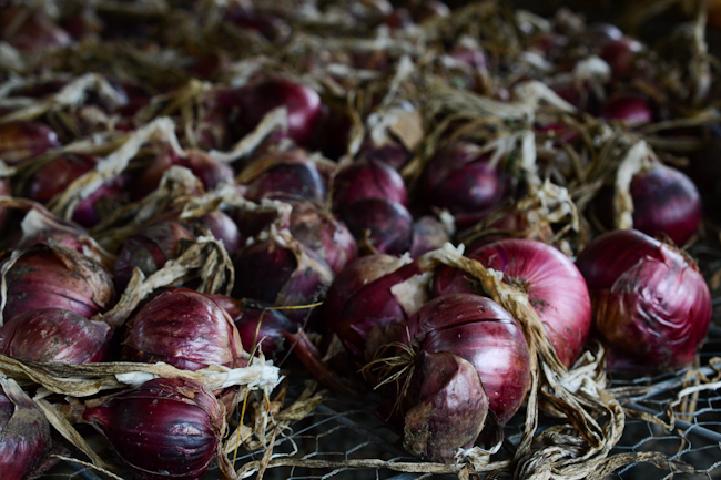 red onions at Oven & Earth Farm // Wayward Spark