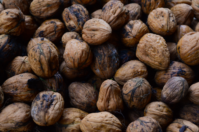 walnuts // Wayward Spark
