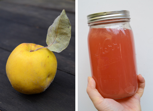 quince and quince juice // Wayward Spark