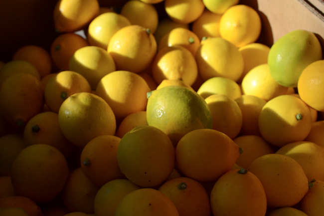 lemons at the Chico Farmer's Market // Wayward Spark
