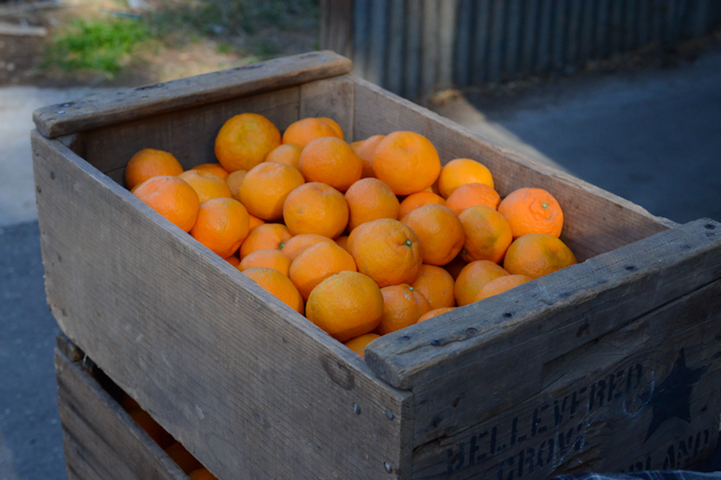 naval oranges at Heath Ranch // Wayward Spark