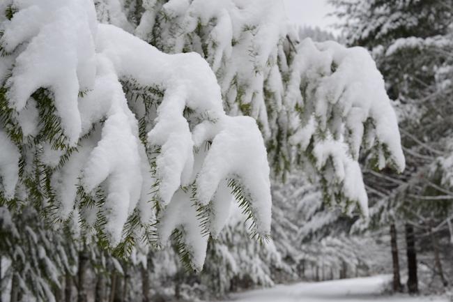snowy forest // Wayward Spark