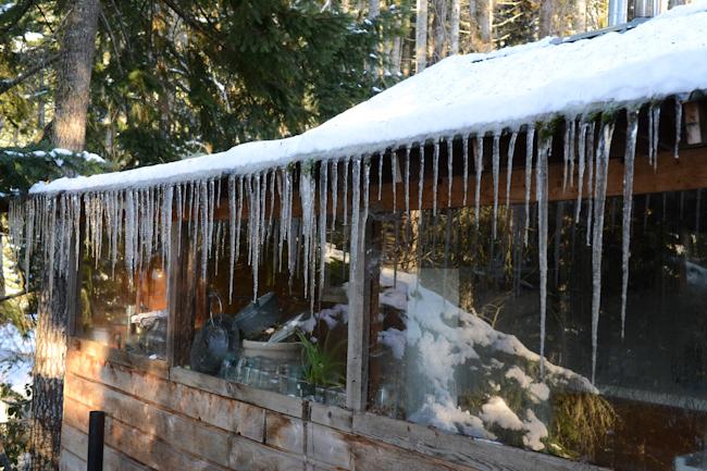 icicles on a cabin // Wayward Spark