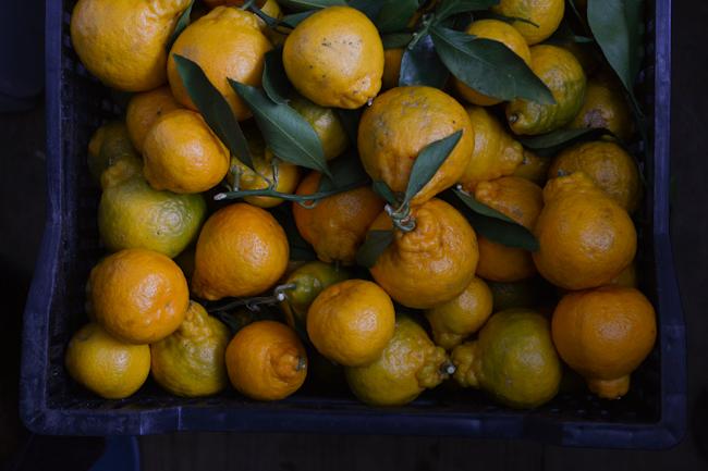 Oregon-grown satsuma mandarins // Wayward Spark
