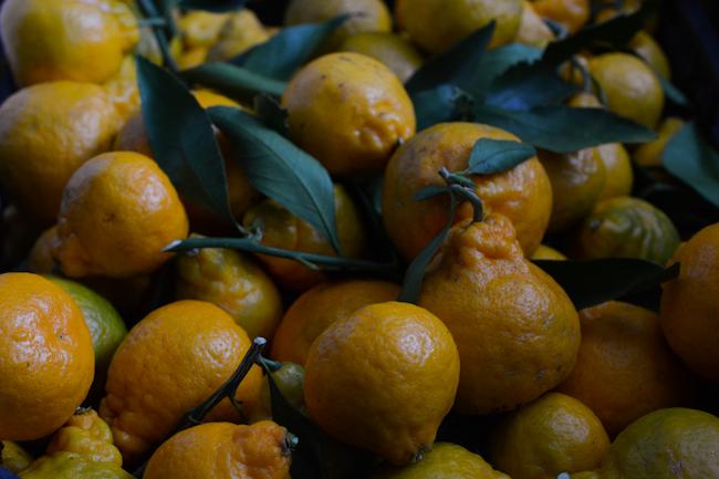 homegrown satsuma mandarins // Wayward Spark
