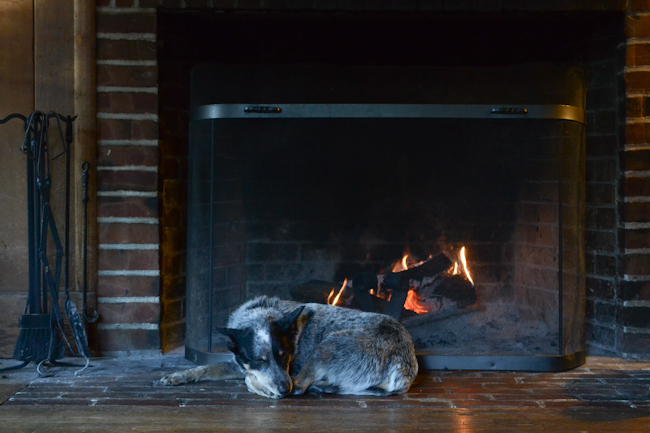 heeler by the fireplace // Wayward Spark