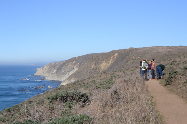 Tomales Point // Wayward Spark