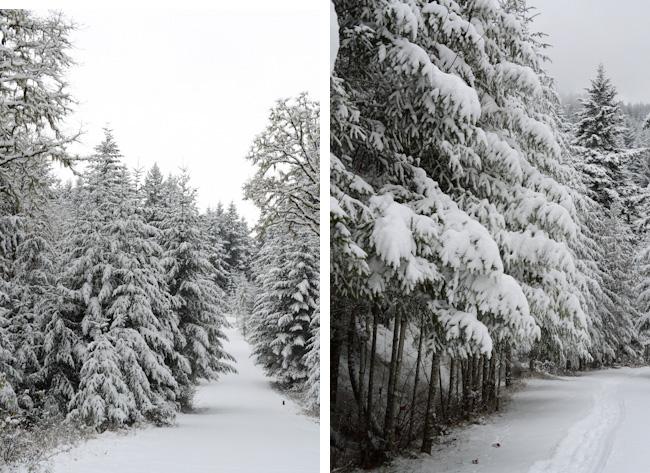 snow in Western Oregon // Wayward Spark