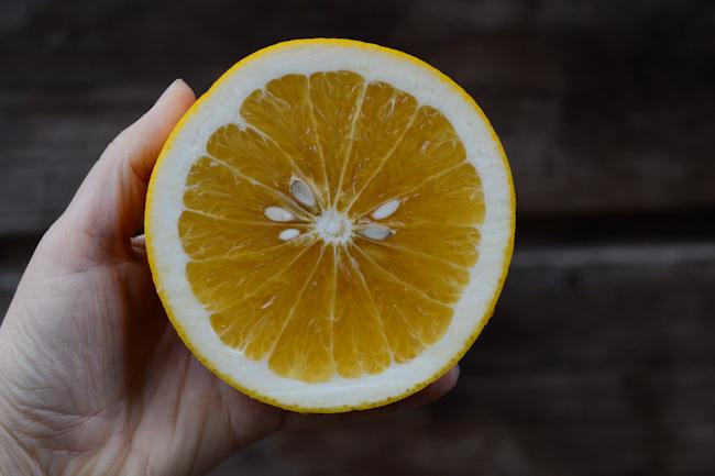 pomelo-mandarin cross // Wayward Spark