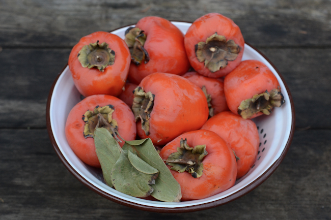 hachiya persimmons // Wayward Spark