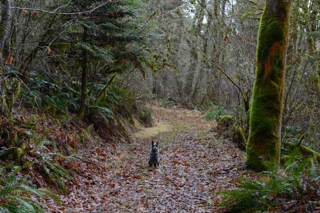 dog in the woods // Wayward Spark