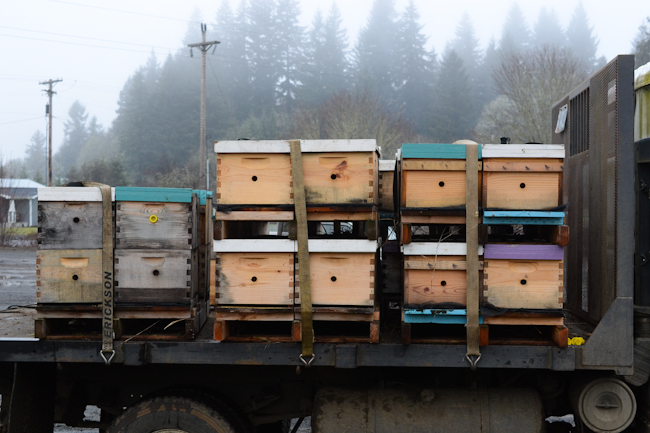 transporting beehives // Wayward Spark