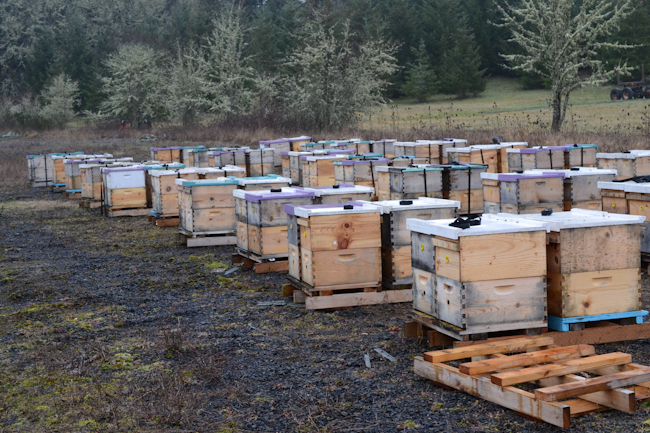 beehives in a holding yard // Wayward Spark