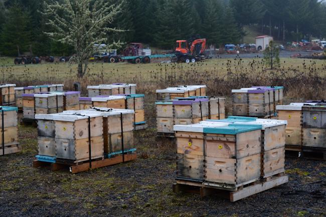 beehives // Wayward Spark
