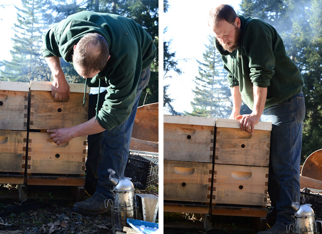 feeding honeybees in winter // Wayward Spark