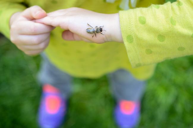 honeybee drones can't sting // Wayward Spark