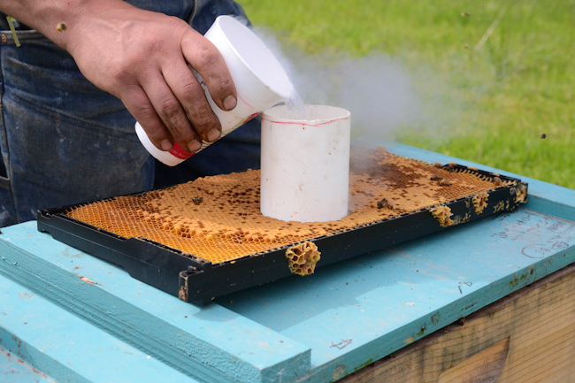 using liquid nitrogen for honeybee hygienic testing // Wayward Spark
