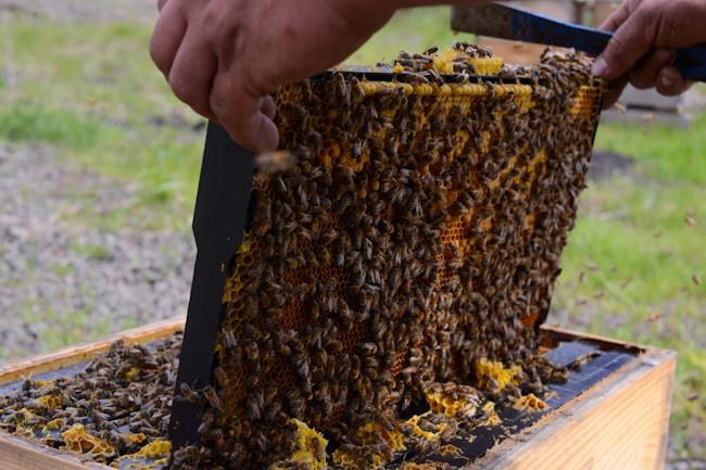 beekeeping // Wayward Spark