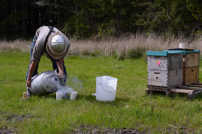 liquid nitrogen for honeybee hygienic testing // Wayward Spark