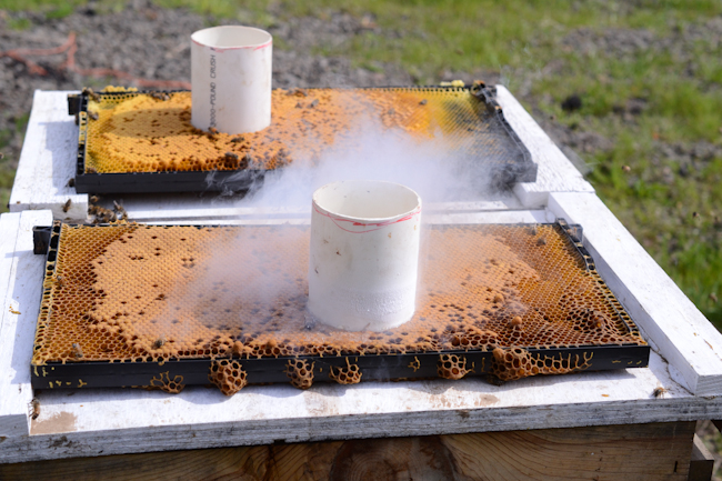 using liquid nitrogen for honeybee hygienic testing with Henry Storch of Old Blue Raw Honey // Wayward Spark