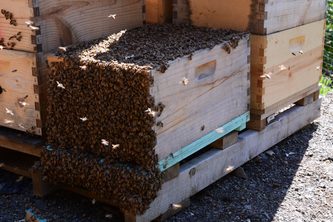 beekeeping with Henry Storch of Old Blue Raw Honey // Wayward Spark